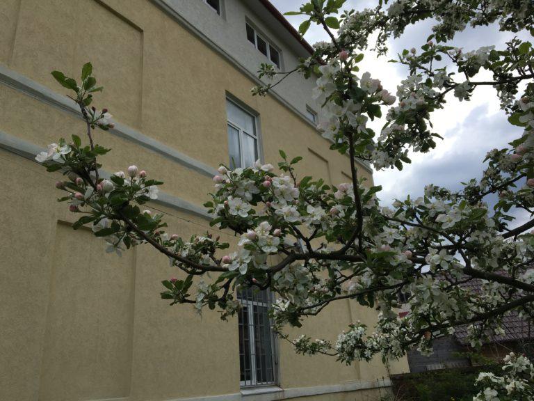 Ліцейський весняний сад